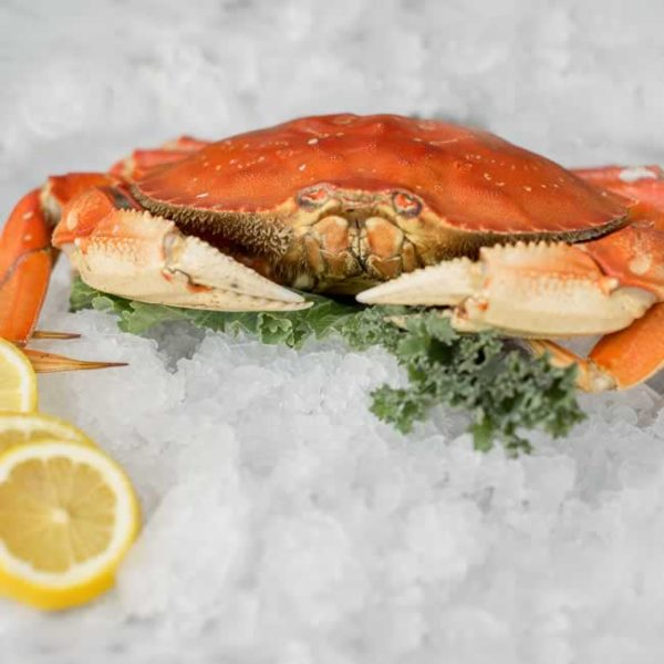 Dungeness Crab (3 Crab Minimum) Includes Shipping!