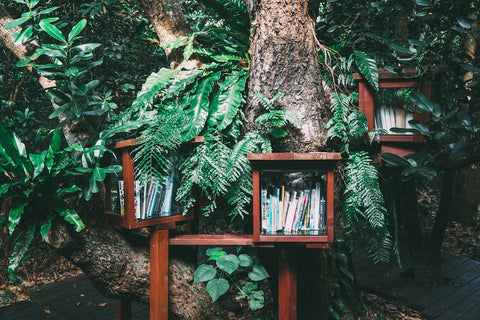 Book cases in the forest in Japan