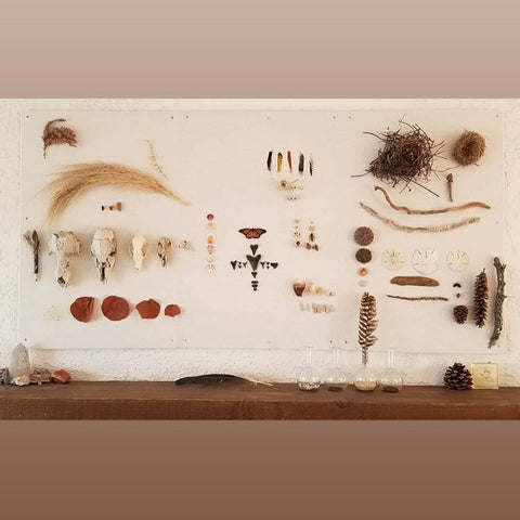 Wall of natural objects: bones, feathers, pine cones, sharks teeth.