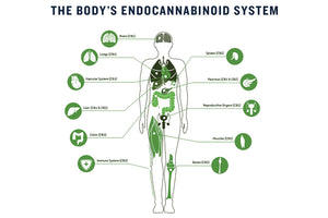 What is the Endocannabinoid System? Read on..