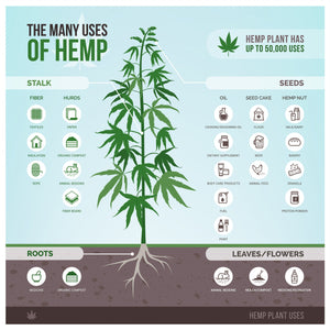 10 things you may not know about HEMP. The Swiss Army knife of Plants!