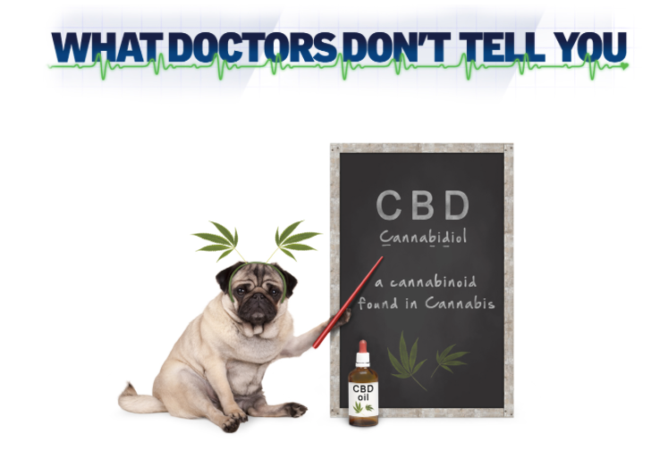How to find a good quality Cannabis/CBD oil and why choose The Canni Family products?