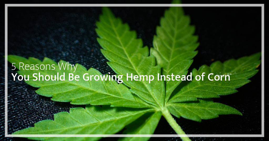 5 Reasons Why You Should Be Growing Hemp Instead of Corn – Wild West