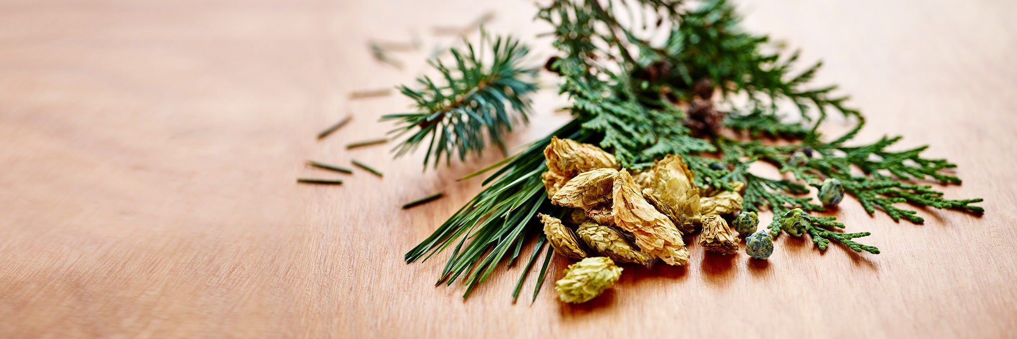 Featured terpenes: Woodsy aromas
