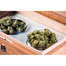 CANNASEUR ONE CANNABIS HUMIDOR