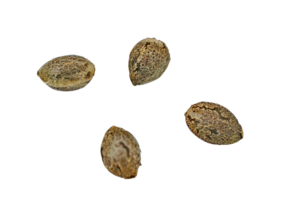 SKUNK VA SEEDS