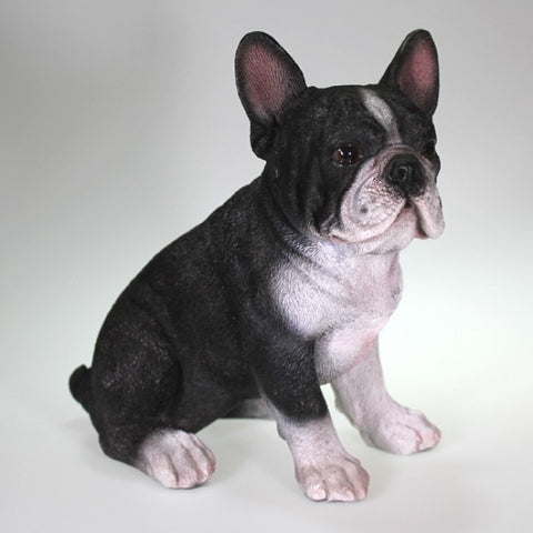 Medium Black and White French Bulldog