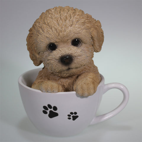 Poodle Puppy in a Teacup