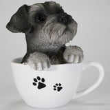 Schnauzer Puppy in a Teacup