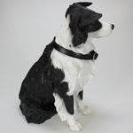 Border Collie - Dog Studies by Leonardo
