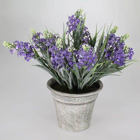 Lavender in Pot - Purple