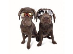 Doggles Chrome frame, Smoke lens