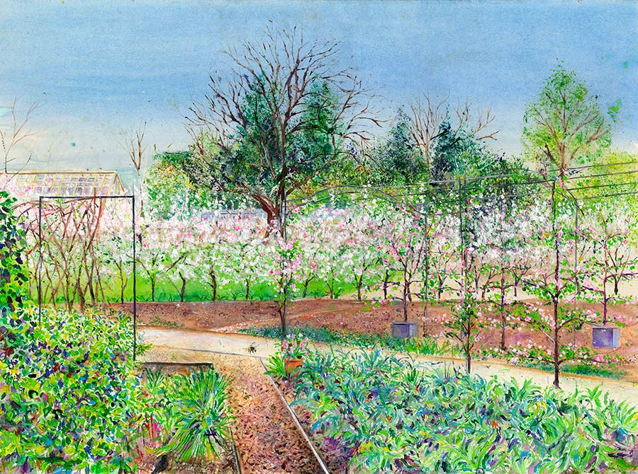 Apple Blossom Hedge in the Kitchen Garden at RHS Garden Harlow Carr, April (Greetings Card)