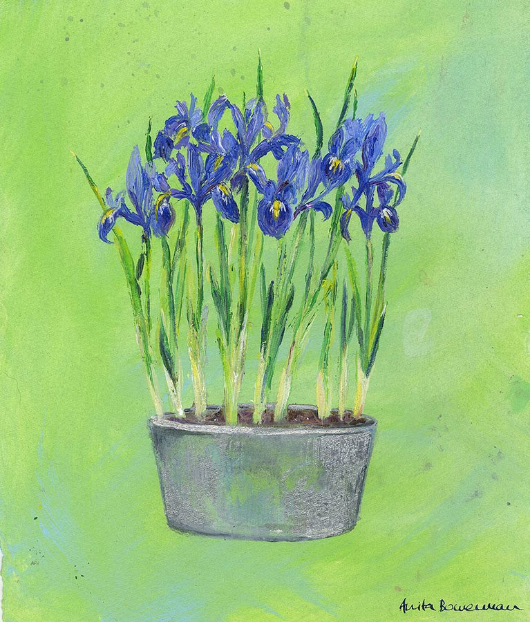 Impressionist Iris Flowers in a Zinc Planter (Original Painting, Unframed)
