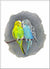 Budgie Love, unframed Giclée limited edition print