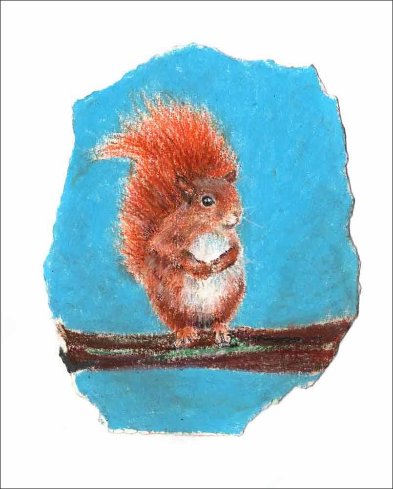Red Squirrel, unframed original drawing