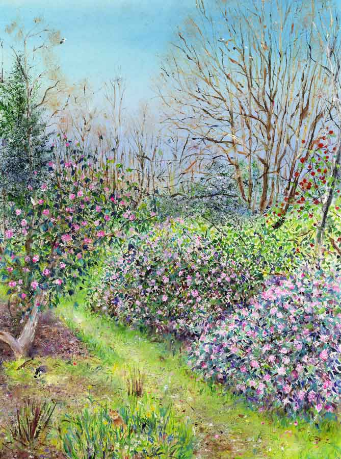 Rhododendron Walk at RHS Garden Harlow Carr, March, original painting