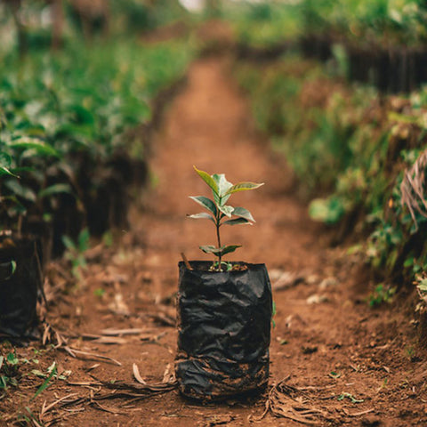 Nordgreen: The Ongoing Mission of Giving Back, image of reforestation efforts.