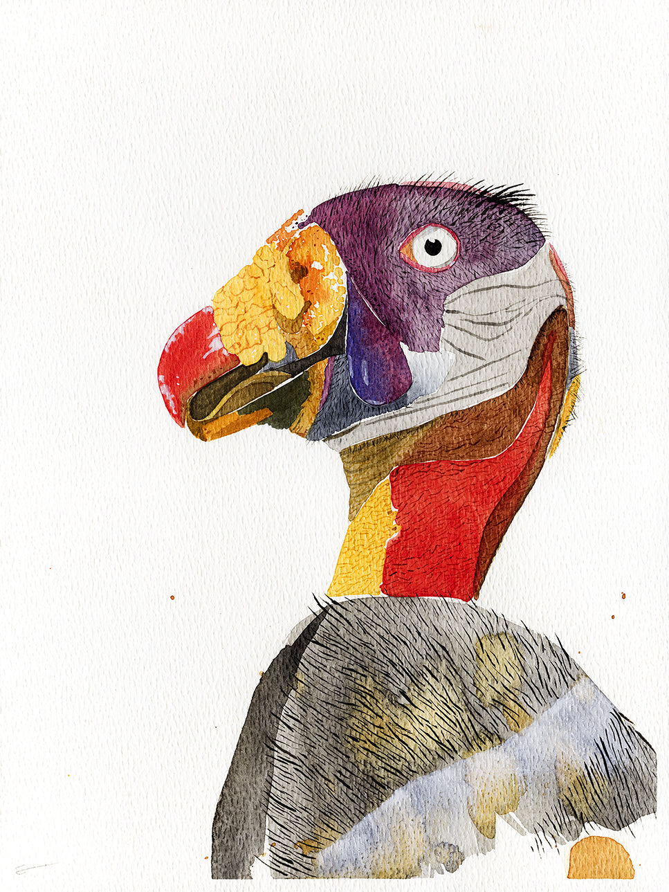 King vulture watercolor painting