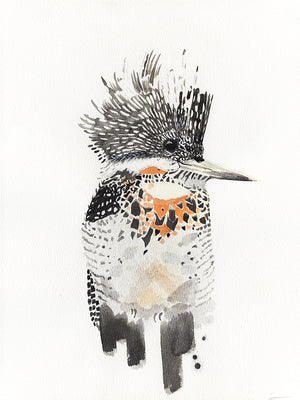 Crested kingfisher watercolor painting