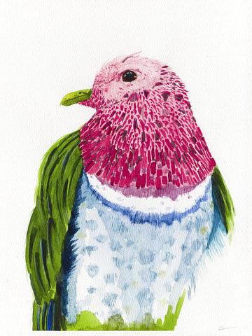 Pink-headed fruit dove watercolor painting