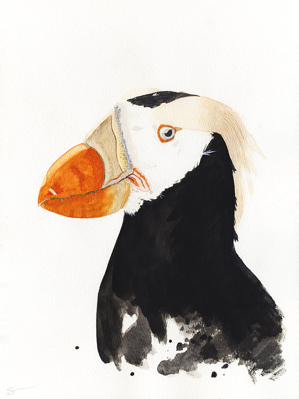 Tufted puffin watercolor painting