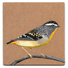 Spotted pardalote acrylic painting