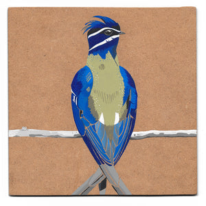 Whiskered treeswift acrylic painting