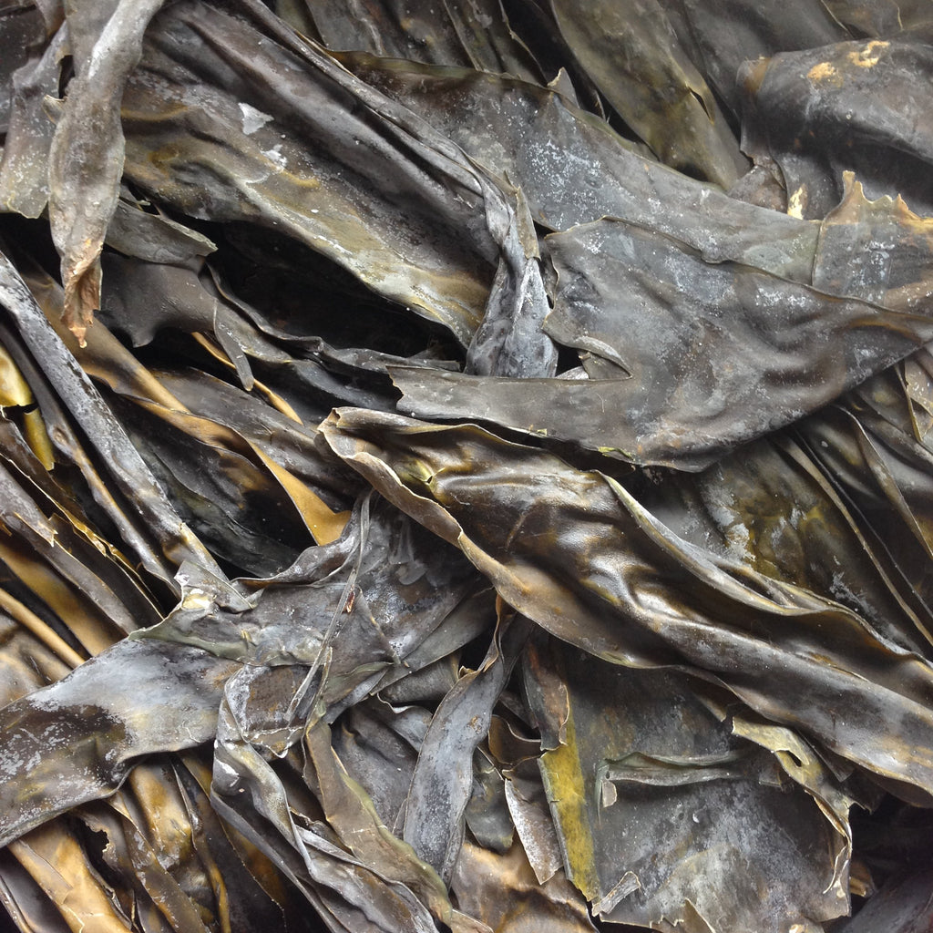 KOMBU, whole, wild harvested | Organic Matters