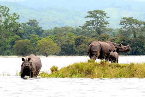 Kaziranga National Park in India