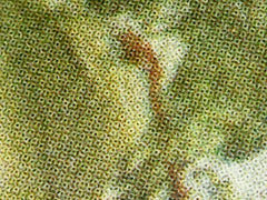 A microsope reveals a magnified look at a print of a painting, distinguished by pixelated colors.