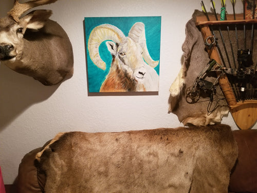 A big horned ram is set in the center of this square canvas. It is painted on a background of solid turquoise and the canvas itself is displayed on the wall between taxidermied animals as a display recommendation.