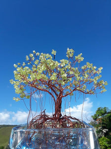 A tall square photo of a copper emerald tree with a blue backdrop and white clouds.