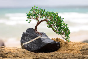 A model of a bonsai tree is made from twisted wire as a trunk and green glass mixed with peridot pieces for leaves. The piece is produced by Bill Bourdon and sold through FEA.Vision.