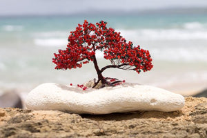 A fiery flambouyan is found fixed to a freshly bleached piece of coral. The miniture treee is construncted from wires and glass and is accompanied by a beautiful Puerto Rican beach in the background.