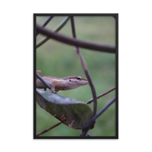 A rectangular picture of a brown lizard on a green leaf looking directly into your soul.