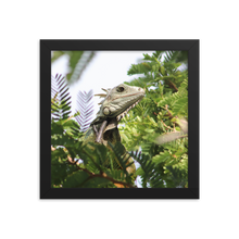 Visualize a black square frame surrounding a pointed and angular head of a pale green creature textured in scales and has spines going down its back perched on a tree with small rounded dark green leaves that are in focus by the lizard and out of focus in the surrounding area.  A First Edition Original photo taken by Andrew Aaron.