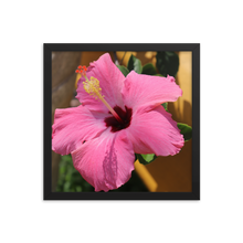 This square photo happens to be framed in black and depicts the most beautiful pink hibiscus flower that you ever did see and is set against the backdrop of a real rainforest.
