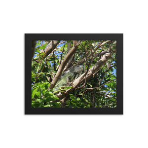 An elite iguana sits perched upon a branch high in the branches of a rainforest tree and happens to be in a black rectangle of a frame.