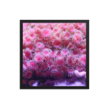 A pile of pink polyps positioned perfectly poke from their perch in the center of a square frame of solid black.