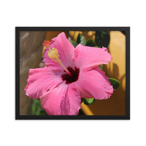 This rectangular photo happens to be framed in black and depicts the most beautiful pink hibiscus flower that you ever did see and is set against the backdrop of a real rainforest.