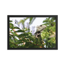 Visualize a black rectangular frame surrounding a pointed and angular head of a pale green creature textured in scales and has spines going down its back perched on a tree with small rounded dark green leaves that are in focus by the lizard and out of focus in the surrounding area.  A First Edition Original photo taken by Andrew Aaron.