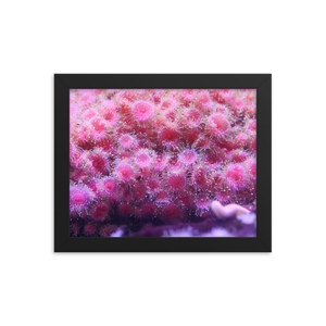 A pile of pink polyps positioned perfectly poke from their perch in the center of a horizontally rectangular frame of solid black.