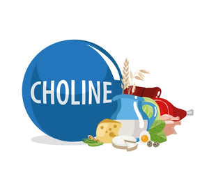choline vitamin b4 health benefits