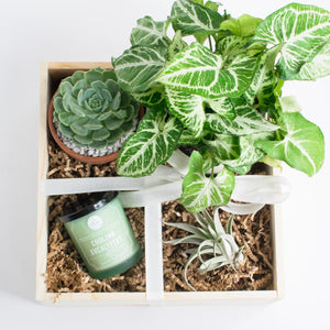 The Plant Lover's Box