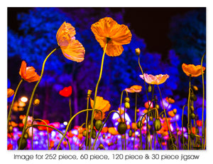 Dancing poppies, Canberra ACT