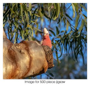 Galah in tree