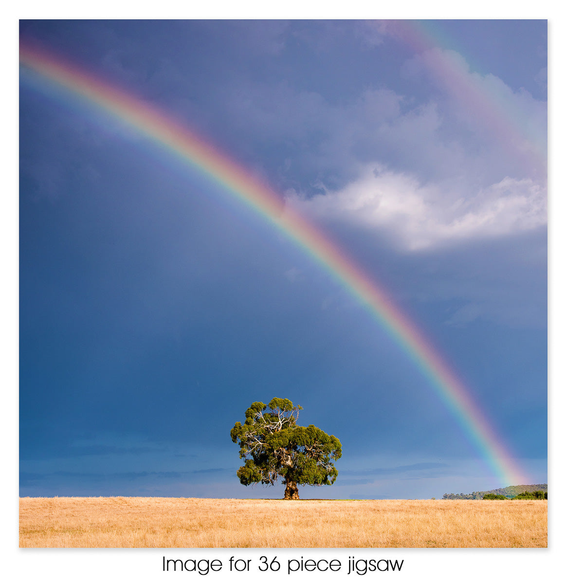 Lone tree rainbow, Lancemore Hill VIC
