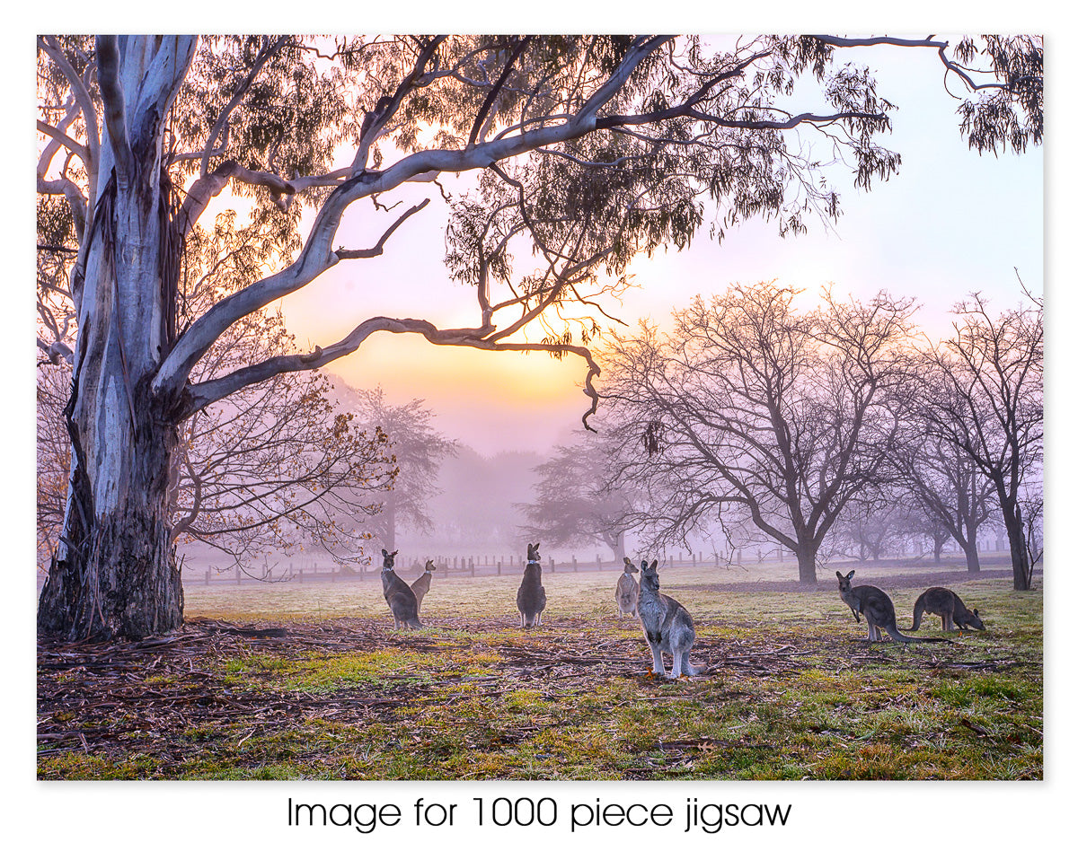 Misty Weston Park, Canberra ACT
