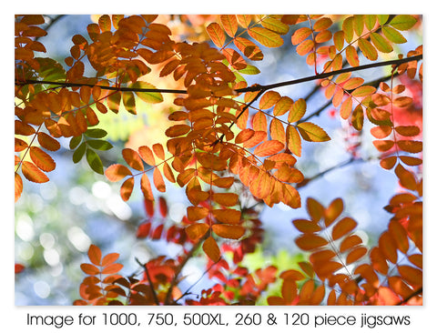 Autumn Leaves in Mount Lofty 02